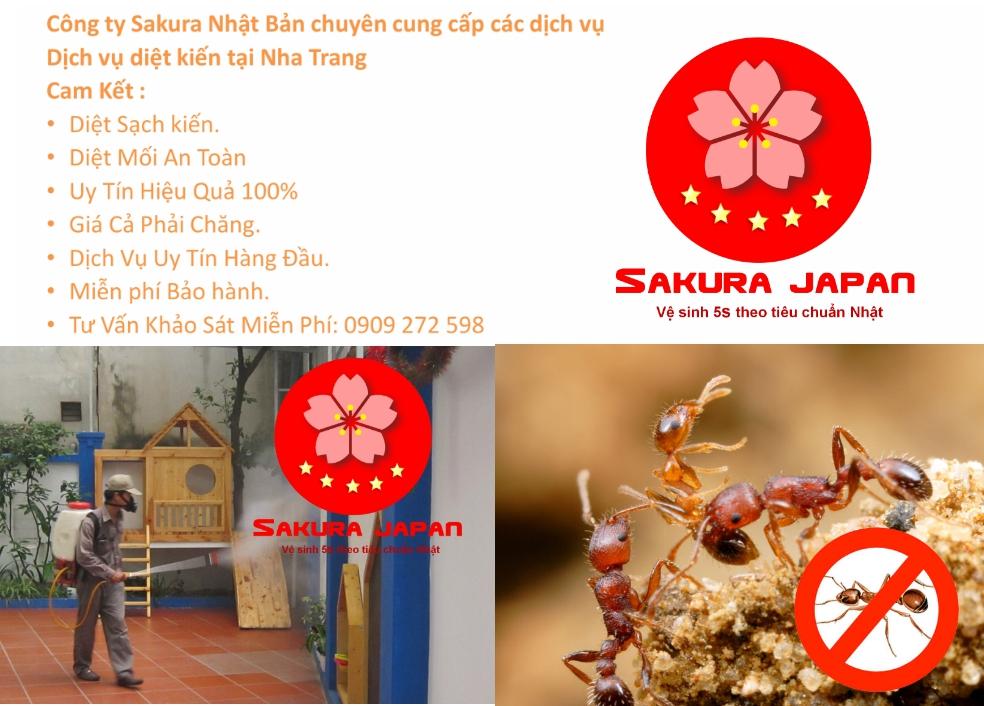 Dịch vụ Diệt kiến ở Nha Trang Uy Tín