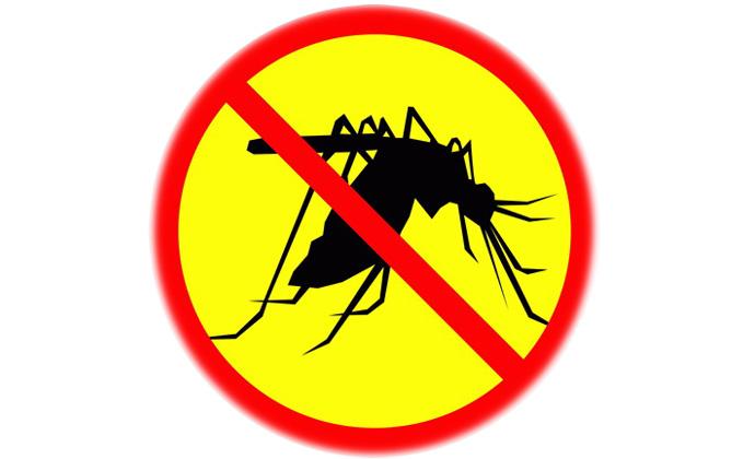 Dịch vụ Diệt Muỗi Nha Trang Hiệu Quả Cao